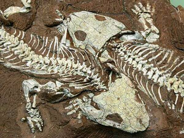 hóa thạch là gì